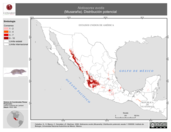Mapa ilustrativo de Notiosorex evotis (Musaraña). Distribución potencial.
