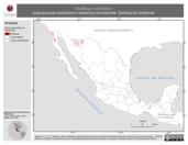Mapa ilustrativo de Nucifraga columbiana (cascanueces americano) residencia permanente. Distribución potencial.