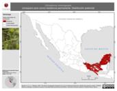 Mapa ilustrativo de Oncostoma cinereigulare (mosquero pico curvo) residencia permanente. Distribución potencial.