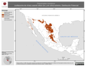 Mapa ilustrativo de Oreoscoptes montanus (cuitlacoche de chías) usando sitios con y sin clima extremo. Distribución Potencial