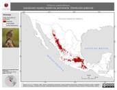 Mapa ilustrativo de Oriturus superciliosus (zacatonero rayado) residencia permanente. Distribución potencial.