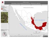 Mapa ilustrativo de Ortalis vetula (chachalaca vetula) residencia permanente. Distribución potencial.