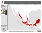 Mapa ilustrativo de Pachyramphus major (mosquero-cabezón mexicano) residencia permanente. Distribución potencial.