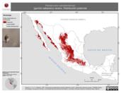 Mapa ilustrativo de Passerculus sandwichensis (gorrión sabanero) verano. Distribución potencial.