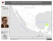 Mapa ilustrativo de Souza Novelo, Narciso. La proyección citada, es exclusiva para el diseño de esta imagen.