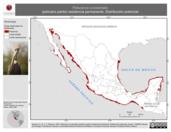Mapa ilustrativo de Pelecanus occidentalis (pelícano pardo) residencia permanente. Distribución potencial.