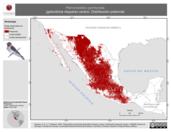Mapa ilustrativo de Petrochelidon pyrrhonota (golondrina risquera) verano. Distribución potencial.
