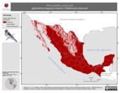 Mapa ilustrativo de Petrochelidon pyrrhonota (golondrina risquera) invierno. Distribución potencial.