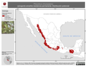 Mapa ilustrativo de Pheucticus chrysopeplus (picogordo amarillo) residencia permanente. Distribución potencial.