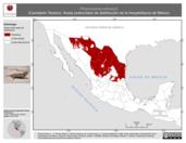 Mapa ilustrativo de Phrynosoma cornutum (Camaleón Texano). Área de distribución potencial. La proyección citada, es exclusiva para el diseño de esta imagen.