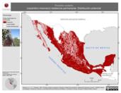 Mapa ilustrativo de Picoides scalaris (carpintero mexicano) residencia permanente. Distribución potencial.