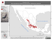 Mapa ilustrativo de Plegadis chihi (ibis cara-blanca) residencia permanente. Distribución potencial.