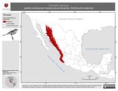 Mapa ilustrativo de Polioptila nigriceps (perlita sinaloense) residencia permanente. Distribución potencial.
