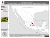 Mapa ilustrativo de Pseudoeurycea cephalica (Tlaconete regordete). Área de distribución potencial. La proyección citada, es exclusiva para el diseño de esta imagen.