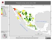 Mapa ilustrativo de Producción de trigo, periodo Verano, 2006