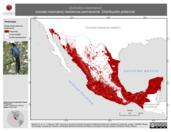 Mapa ilustrativo de Quiscalus mexicanus (zanate mexicano) residencia permanente. Distribución potencial.