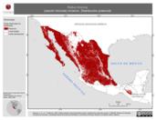 Mapa ilustrativo de Rallus limicola (rascón limícola) invierno. Distribución potencial.