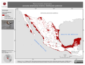 Mapa ilustrativo de Recurvirostra americana (avoceta americana) invierno. Distribución potencial.