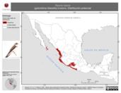 Mapa ilustrativo de Riparia riparia (golondrina ribereña) invierno. Distribución potencial.