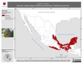 Mapa ilustrativo de Saltator atriceps (picurero cabeza negra) residencia permanente. Distribución potencial.