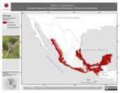 Mapa ilustrativo de Saltator coerulescens (picurero grisáceo) residencia permanente. Distribución potencial.
