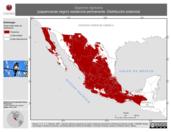 Mapa ilustrativo de Sayornis nigricans (papamoscas negro) residencia permanente. Distribución potencial.