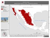 Mapa ilustrativo de Sayornis saya (papamoscas llanero) verano. Distribución potencial.