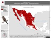 Mapa ilustrativo de Sayornis saya (papamoscas llanero) invierno. Distribución potencial.