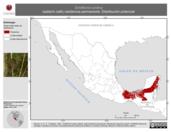 Mapa ilustrativo de Schiffornis turdina (saltarín café) residencia permanente. Distribución potencial.