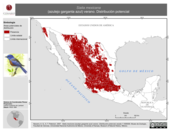 Mapa ilustrativo de Sialia mexicana (azulejo garganta azul) verano. Distribución potencial.