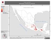 Mapa ilustrativo de Sorex ventralis (Musaraña). Distribución potencial.