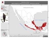Mapa ilustrativo de Spizaetus ornatus (águila elegante) residencia permanente. Distribución potencial.