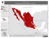 Mapa ilustrativo de Spizella pallida (gorrión pálido) invierno. Distribución potencial.