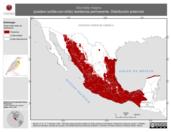 Mapa ilustrativo de Sturnella magna (pradero tortilla-con-chile) residencia permanente. Distribución potencial.