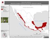 Mapa ilustrativo de Tachycineta albilinea (golondrina manglera) residencia permanente. Distribución potencial.