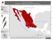 Mapa ilustrativo de Tachycineta thalassina (golondrina verdemar) verano. Distribución potencial.