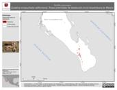 Mapa ilustrativo de Tantilla planiceps (Culebra encapuchada californiana). Área de distribución potencial. La proyección citada, es exclusiva para el diseño de esta imagen.
