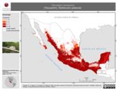 Mapa ilustrativo de Tlacuatzin canescens (Tlacuachín). Distribución potencial.