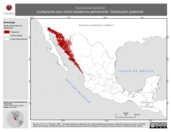 Mapa ilustrativo de Toxostoma bendirei (cuitlacoche pico corto) residencia permanente. Distribución potencial.