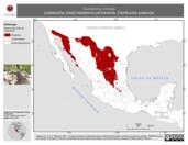 Mapa ilustrativo de Toxostoma crissale (cuitlacoche crisal) residencia permanente. Distribución potencial.