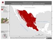 Mapa ilustrativo de Toxostoma curvirostre (cuitlacoche pico curvo) residencia permanente. Distribución potencial.