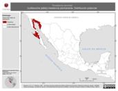 Mapa ilustrativo de Toxostoma lecontei (cuitlacoche pálido) residencia permanente. Distribución potencial.