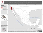 Mapa ilustrativo de Toxostoma redivivum (cuitlacoche californiano) residencia permanente. Distribución potencial.