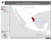 Mapa ilustrativo de Toxostoma rufum (cuitlacoche rojizo) invierno. Distribución potencial.