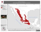 Mapa ilustrativo de Turdus migratorius (mirlo primavera) verano. Distribución potencial.