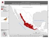 Mapa ilustrativo de Turdus rufopalliatus (mirlo dorso rufo) residencia permanente. Distribución potencial.