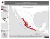 Mapa ilustrativo de Vireo atricapilla (vireo gorra negra) invierno. Distribución potencial.