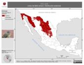 Mapa ilustrativo de Vireo bellii (vireo de Bell) verano. Distribución potencial.