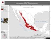 Mapa ilustrativo de Vireo gilvus (vireo gorjeador) verano. Distribución potencial.