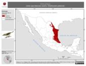 Mapa ilustrativo de Vireo griseus (vireo ojos blancos) verano. Distribución potencial.